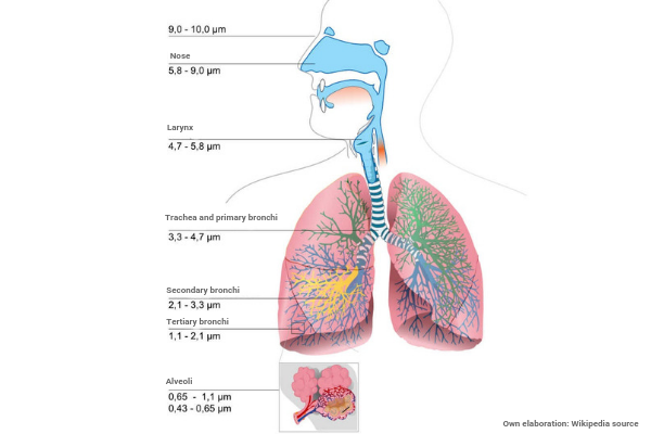 Respiratoty system and the degree of penetration of the particles according to their size